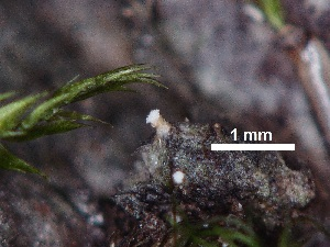 (Ascomycota_class_incertae_sedis - BIOUG24047-H07)  @11 [ ] CreativeCommons - Attribution Non-Commercial Share-Alike (2015) Biodiveristy Institute of Ontario Biodiveristy Institute of Ontario